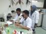 Vector Dengue